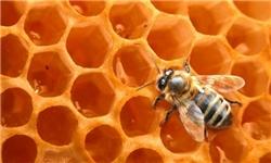 خبرگزاری فارس: صادرات ۵ هزار تن عسل از کشور/ تولید هر کندو در دنیا ۲۰ کیلو در ایران ۱۱.۵ کیلوگرم