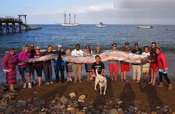 درازترین ماهی دنیا + عکس